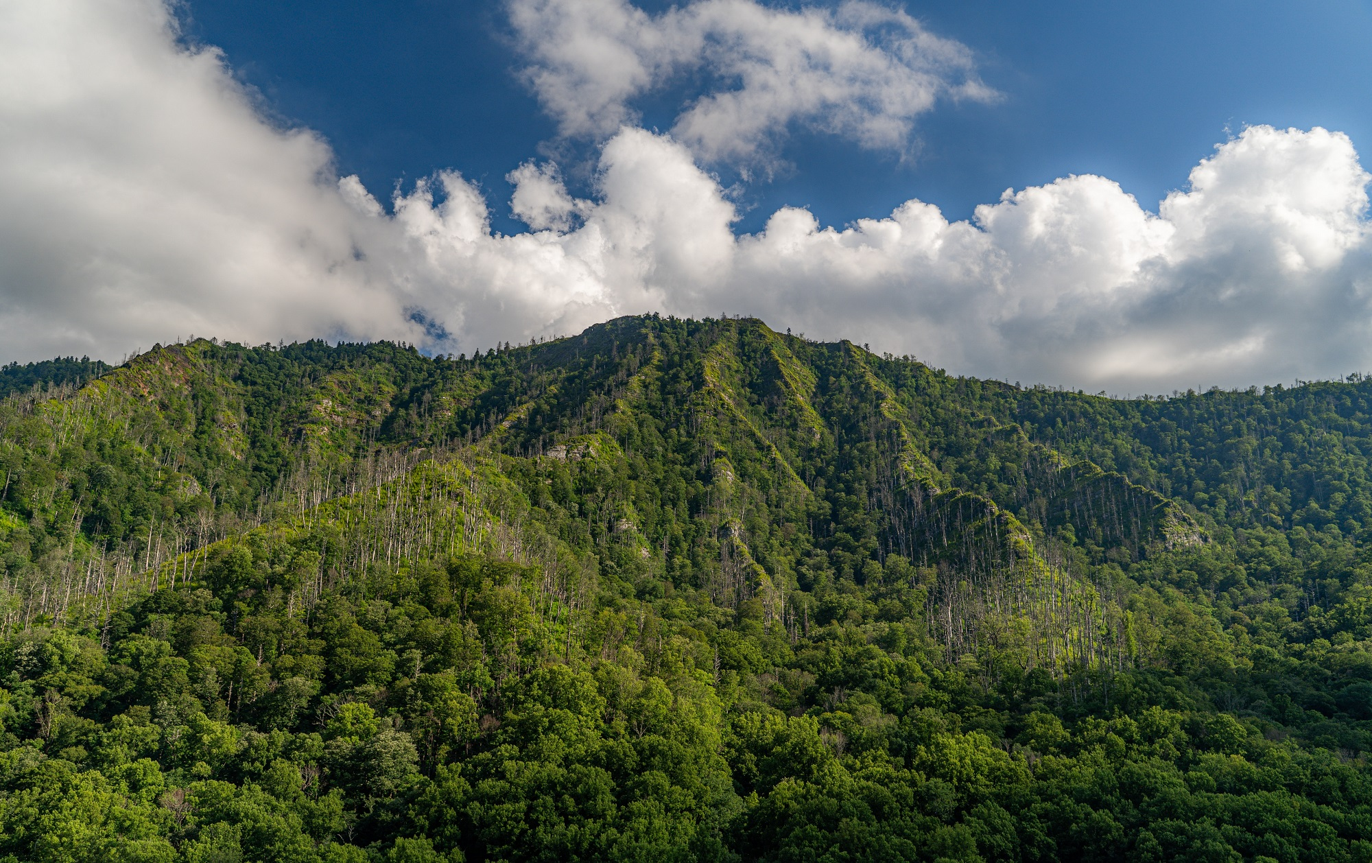 The best Smoky Mountain Trails recommended by Star Gazer Stays